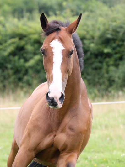 horse passports from Pet ID Equine