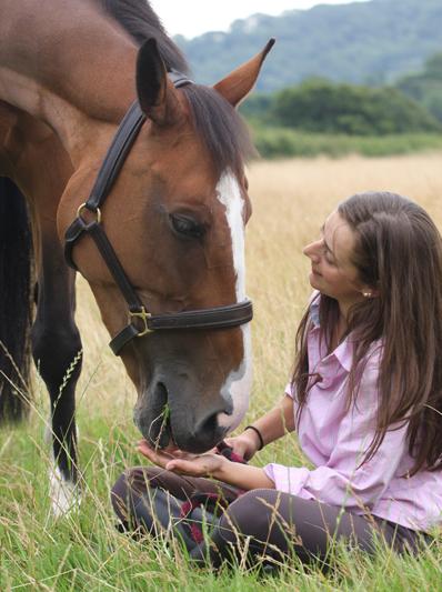 Pet ID Equine horse passports